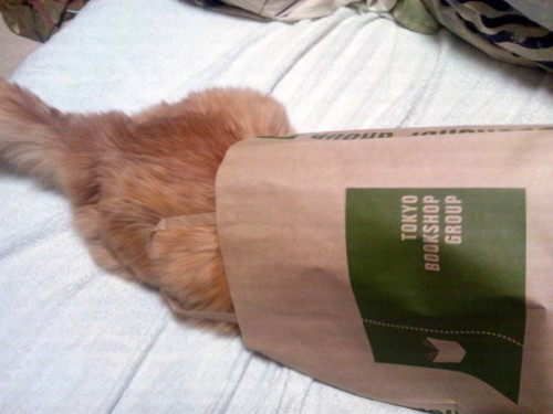 紙袋に頭から突撃するあげさん