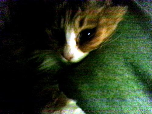布団の中で太もも枕