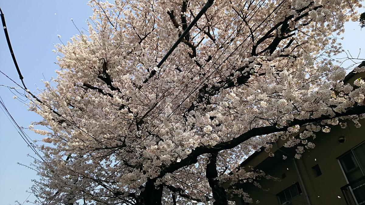 地元の桜(その1)