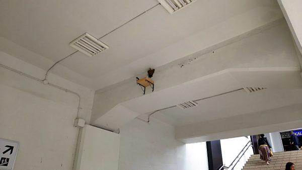 ツバメの巣(その1)