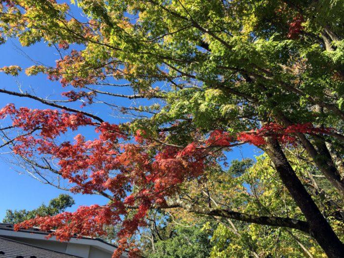 高尾山山頂で紅葉を観る
